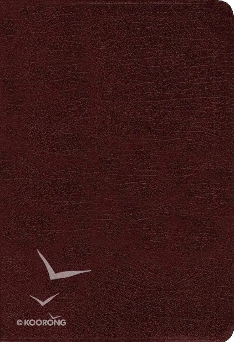 Amplified Holy Bible Burgundy (Black Letter Edition) Bonded Leather