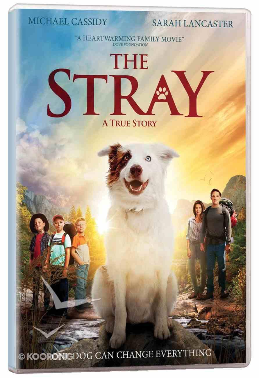 Scr the Stray Screening Licence Standard Digital Licence